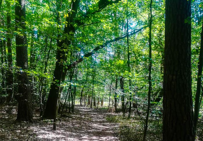 Der Spessartweg 1 führt zwischen Lohr am Main und Gemünden durch viel Wald.