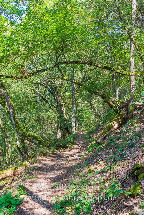 Lemberg wandern: herrliche Pfade unter Bäumen