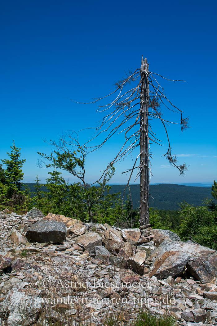 Auf den Altkönig wandern: unverbautes Gipfelglück im Taunus