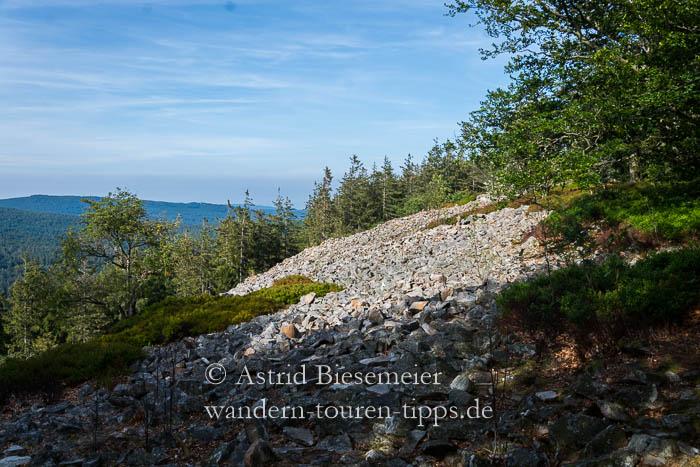 Über die Weiße Mauer auf den Altkönig: Diese Taunus-Wanderung führt vorbei am Feelsenmeer aus Taunusquarzit.