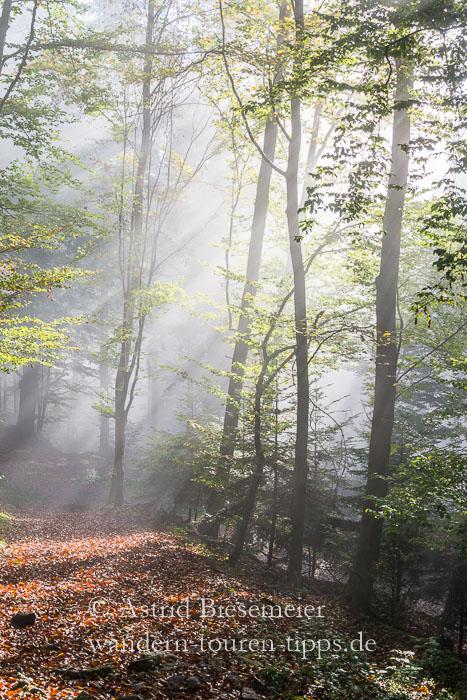 Lichtstrahlen bei Nebel im Battert-Wald bei Baden-Baden