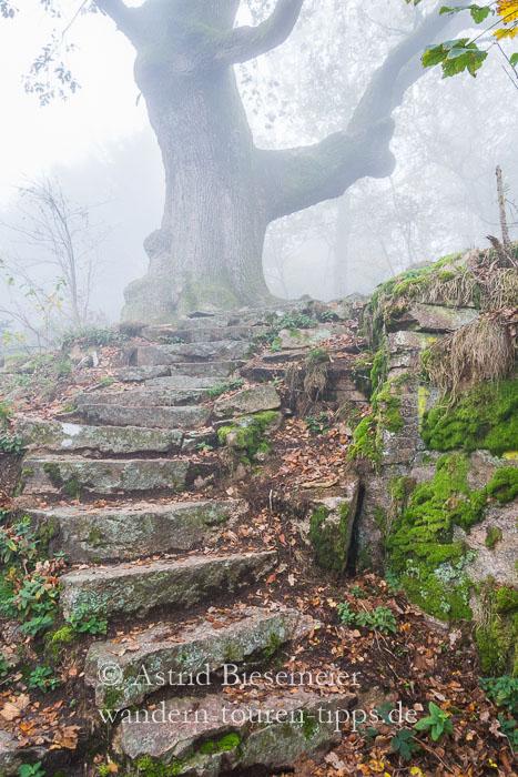 Bei Baden-Baden wandern: Mystische Felsentreppen auf dem Ebersteinburg-Rundweg bei Nebel