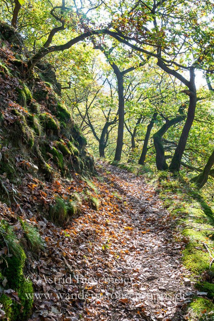 Über Traumpfade in der Eifel zur Wolfsschlucht und Laacher See