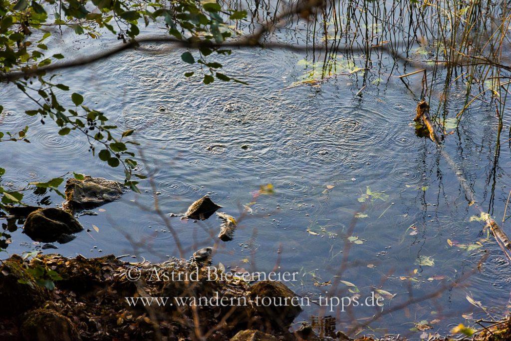 Sprudelnde Mofetten am Laacher See zeigen das vulkanische Erbe.