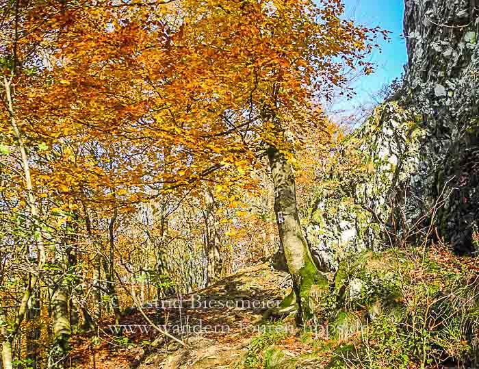 Taunus-Wanderung: Zacken-Beilstein-Steig mit Felsen im Herbstrausch