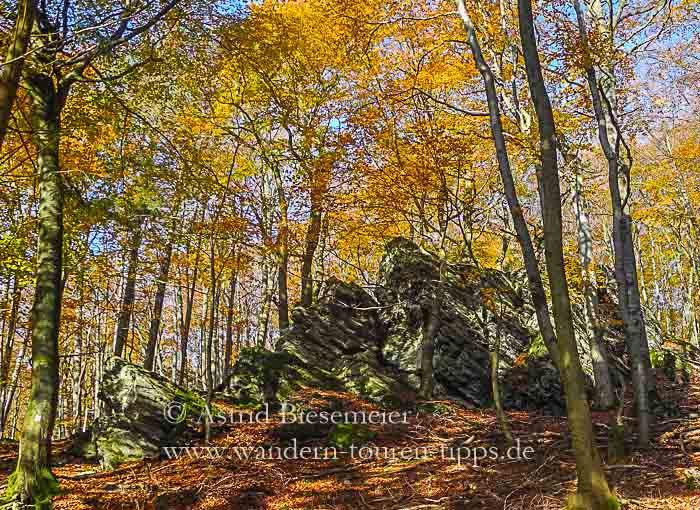 Im Taus wandern: Zacken-Beilstein-Steig im Herbstrausch