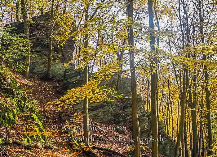 Taunus wandern: Am Zacken-Beilstein-Steig zeigt der Taunus auch Wald sein Gebirge.