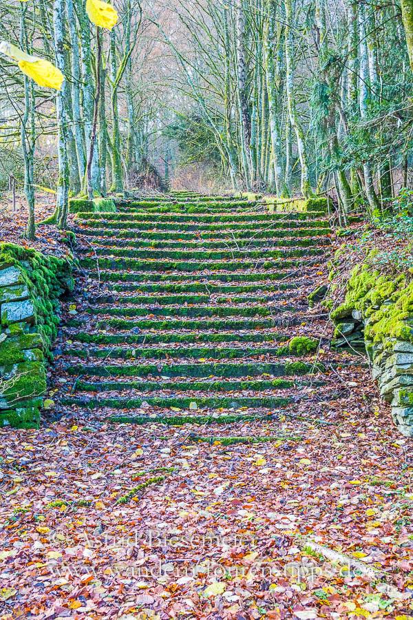 Die Treppen auf dem Wispertalsteig erinnern an das ehemalige Reichsarbeitsdienstlager