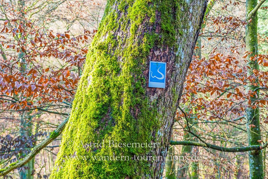 Auf dem Wispertalsteig wandern: Das weiße W auf blauem Grund ist das Wegzeichen für diese Wanderung.