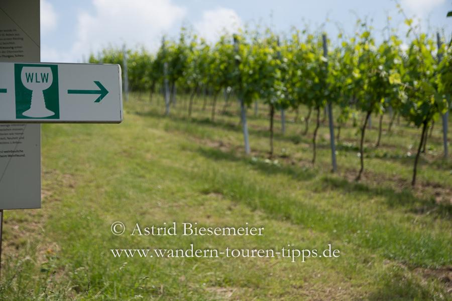 """Wandern Bergstraße: Auf dem Rundweg """"Wein und Stein"""" leitet ein Weinkelch durch die Rundwanderung."""