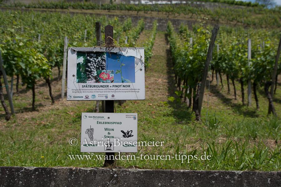 """Auf dem Rundweg """"Wein und Stein"""" vermitteln Tafeln in den Weinbergen Wissenswertes zum Weinanbau in Heppenheim."""