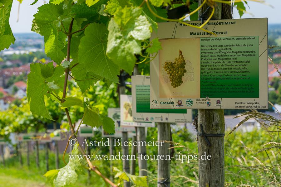 """Wandern Bergstraße: Auf dem Rundweg """"Wein und Stein"""" vermitteln Tafeln in den Weinbergen Wissenswertes zum Weinanbau in Heppenheim."""