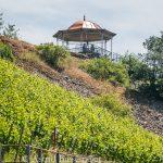Von Rüdesheim nach Assmannshausen: Geschichte(n) am Wegesrand