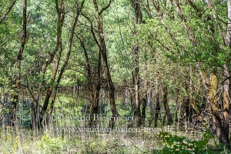 Kühkopf-Wanderwege führen durch unterschiedliche Landschaften.