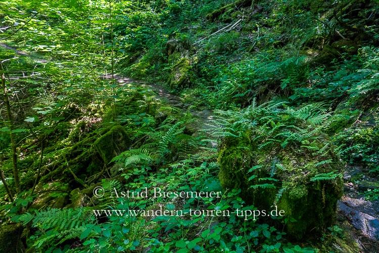 Zwei schöne Neckarsteig-Etappen wandern in einer: über idyllische Pfade