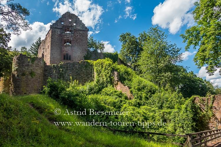 Highlights von zwei Etappen des Neckarsteigs in einer Wanderung