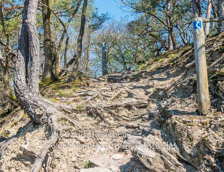 Rheinsteig wandern auf einer der schönsten Etappen