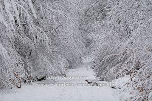 Taunus: Winterwanderung im Schnee