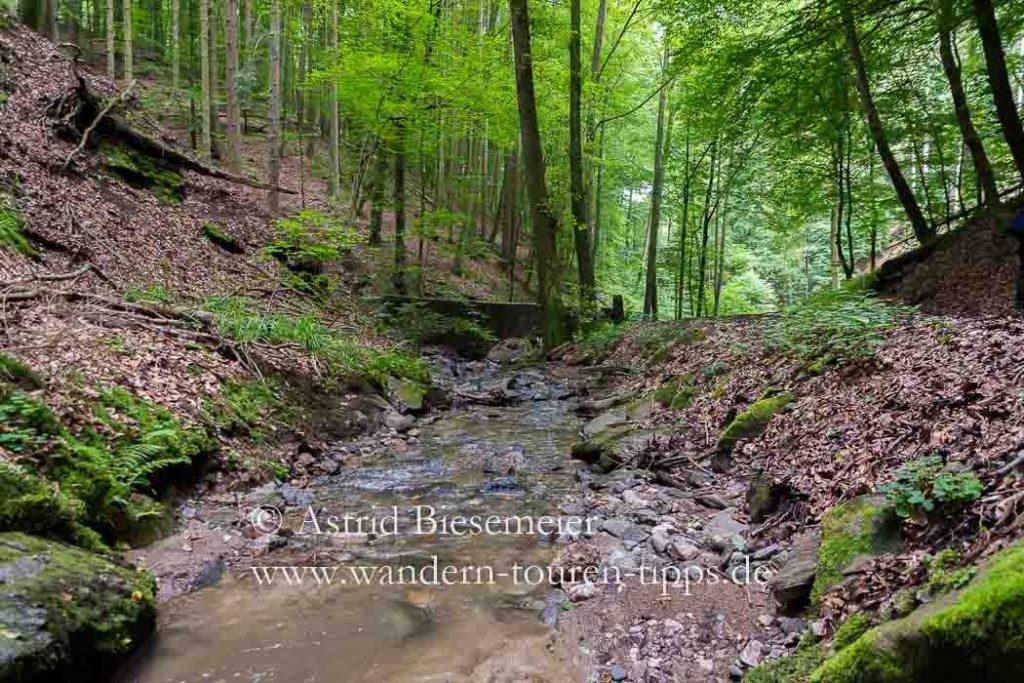 In der Rückersbacher Schlucht sorgt auch der leise plätschernde Rückersbach für angenehme Temperaturen.