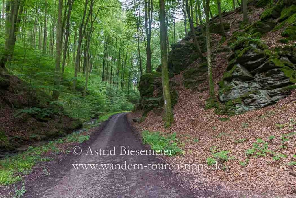 Wer durch die Rückersbacher Schlucht im Spessart wandert, kann auf gut begehbare Wege zählen.