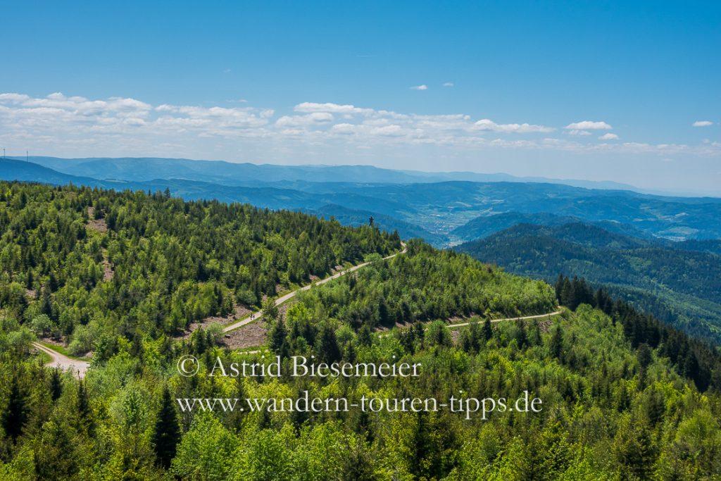 Höchste Stelle der Mooskopf-Wanderung: Aussicht vom Moosturm auf dem Mooskopf auf die noch jungen Wälder der Umgebung